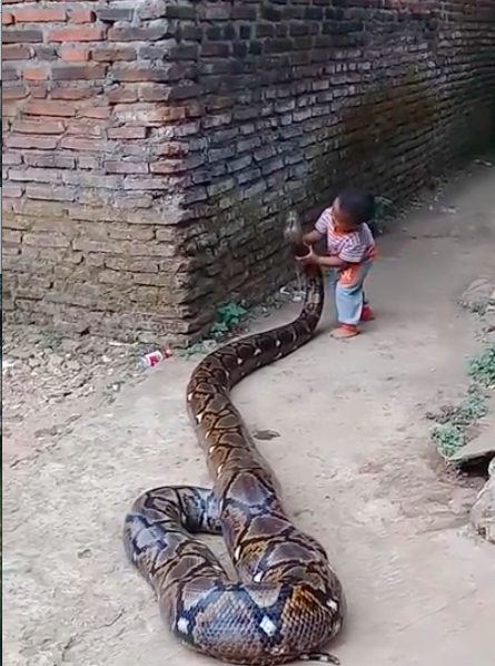 Child plays with python