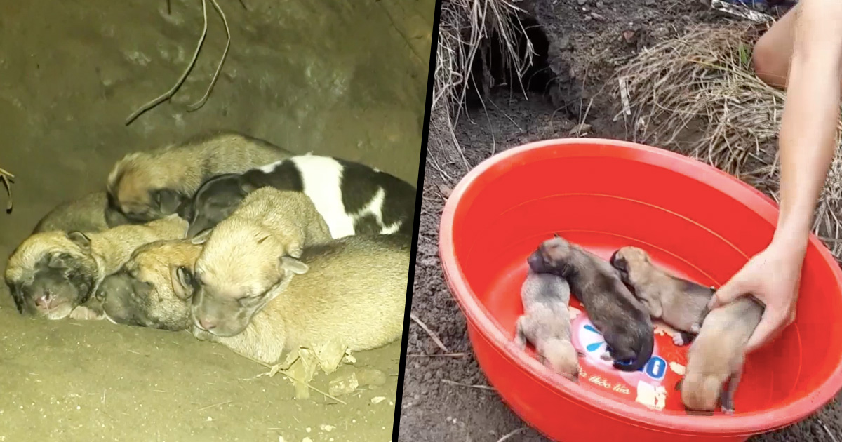 Puppies being rescued from cave