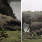 Heartbreaking Footage Shows Elephant 'Death Ritual' After Leader Was Killed