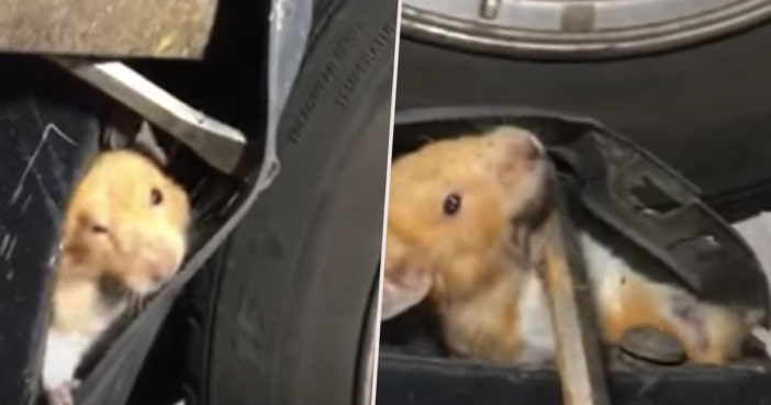 Mechanics save hamster.