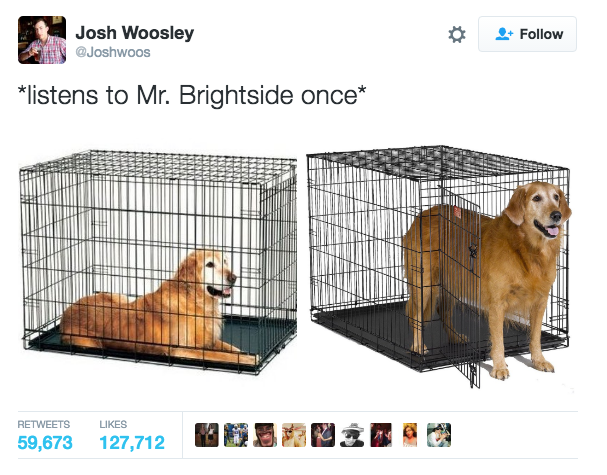 mr brightside dog coming out cage meme