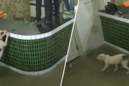 Dog scares workers