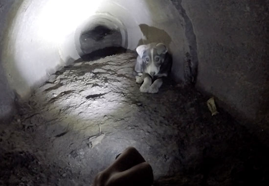 Puppy rescued from tunnel