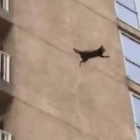 Incredible Moment Raccoon Lands Nine-Story Jump Off Building