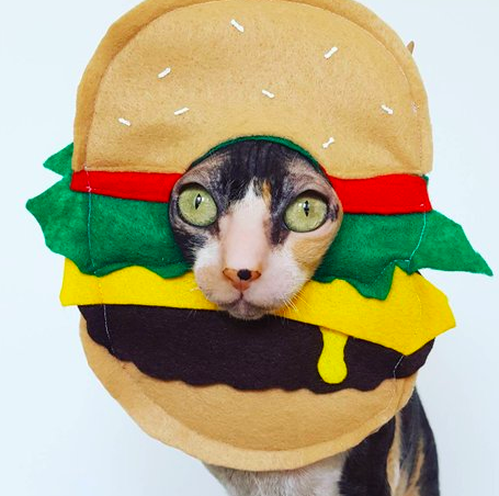 Cat burger costume