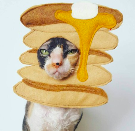 Cat disguised as pancakes