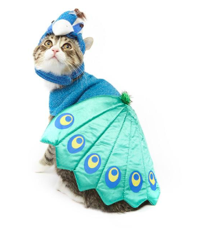 Peacock cat costume halloween