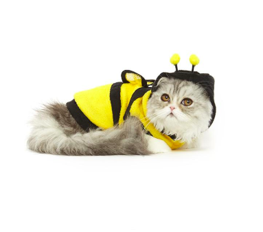Bee cat costume halloween