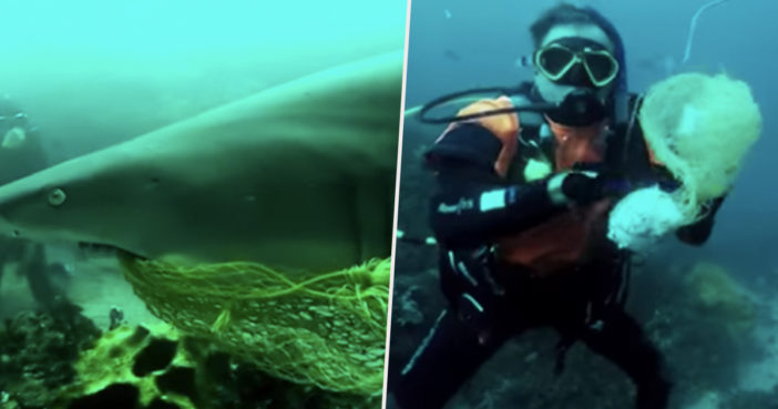 Diver saves shark from net.