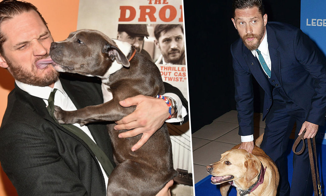 tom hardy dogs