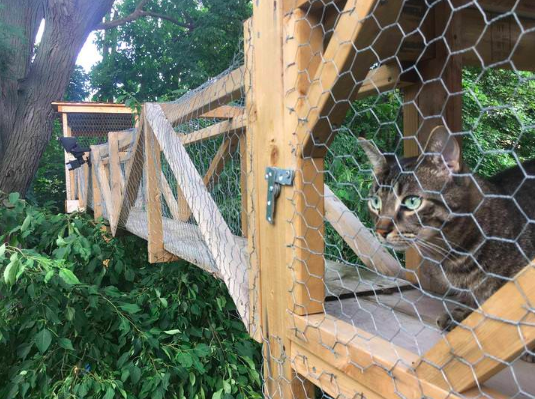 treehouse for cats
