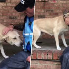 Terrified Dog So Happy To See Rescuers After He Was Abandoned During Hurricane