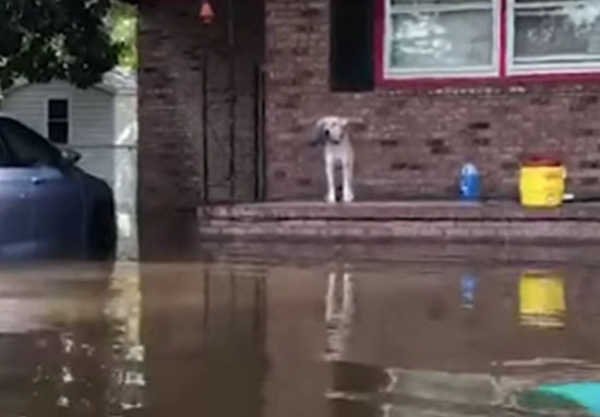 Dog rescued from flood