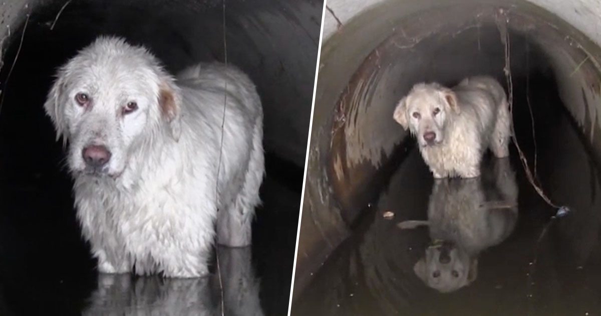 Dog Gets Rescued From Drainage Pipe In Romania