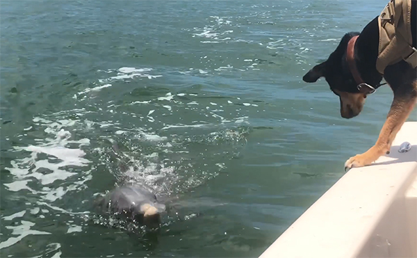 dog makes friends dolphin