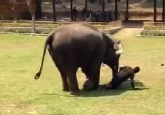 elephant protecting carer
