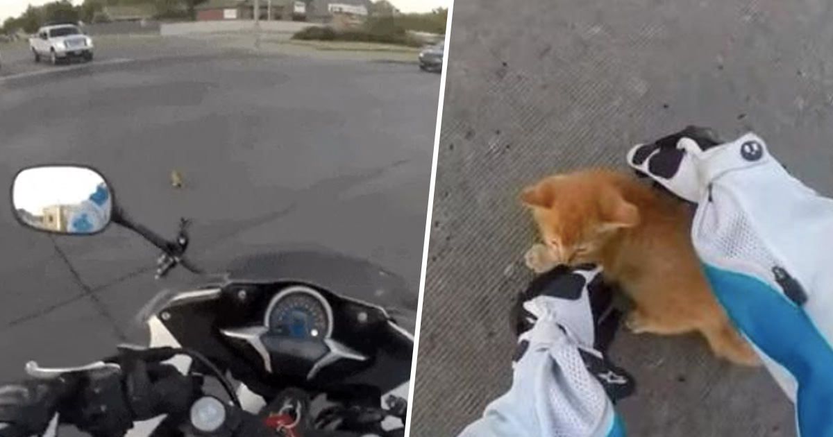 Kitten saved by biker