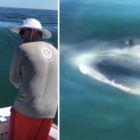 Incredible Moment Great White Shark Steals Fisherman's Catch