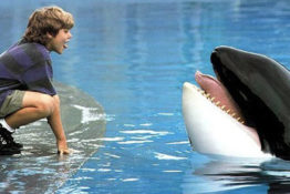 Free Willy star is arrested.