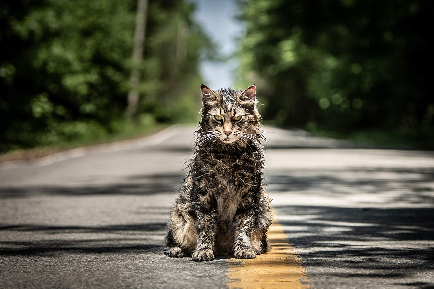 The evil cat from Pet Sematary
