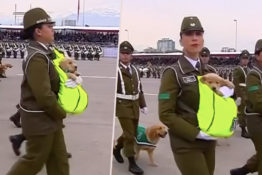 Puppies take part in military parade.