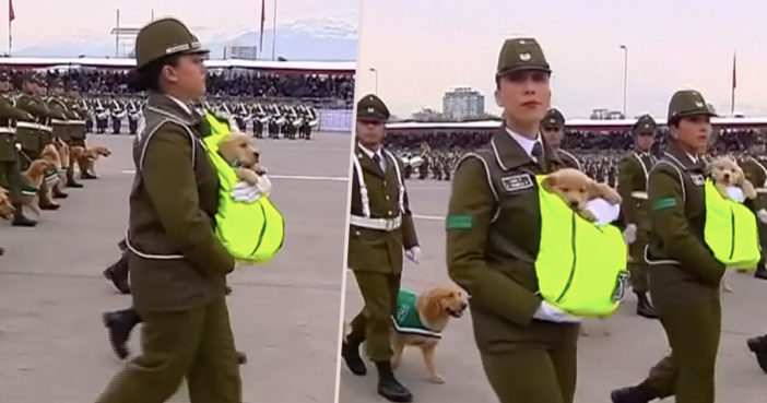 Puppies military parade Chile
