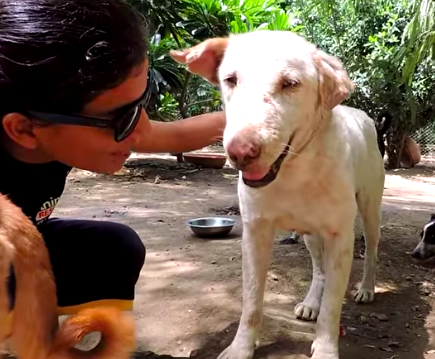 Rescuers give dying dog second chance.