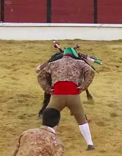 Portuguese bull fight goes wrong.
