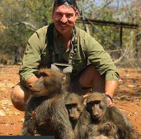 Hunted baboons
