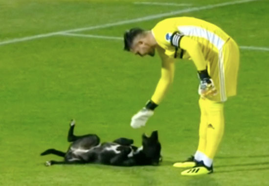 Dog invades football pitch