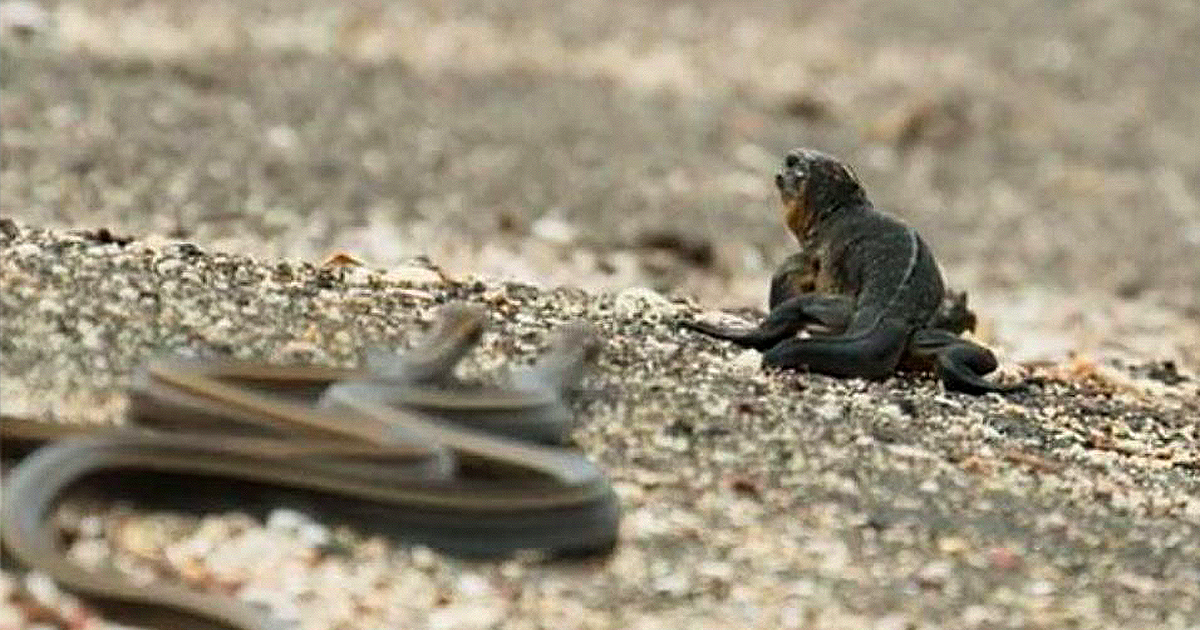 Still of the iguana vs snakes scene in Planet Earth II