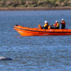 Bonfire Night Fireworks Cancelled In Case It Upsets Whale In The Thames