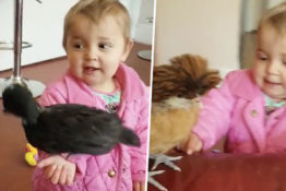 toddler with pet chickens