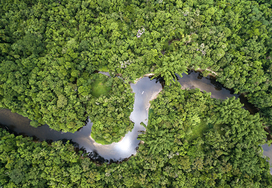 Amazon Rainforest river bend