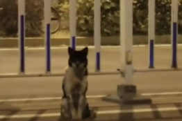 Dog waits on side of road for 2 months