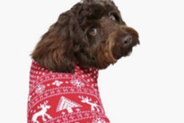 Dog sat in a christmas jumper
