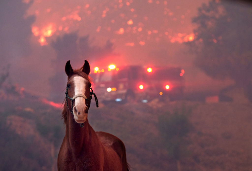 Horse in peril during wildfires.