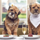 Half Of Pet Owners Enjoy Hanging Out With Their Pets More Than Their Friends