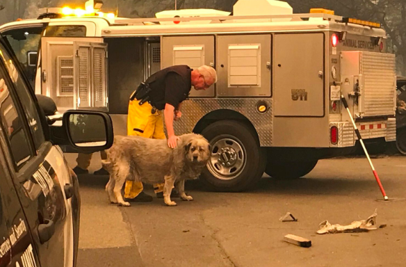 Dog rescued from California fires