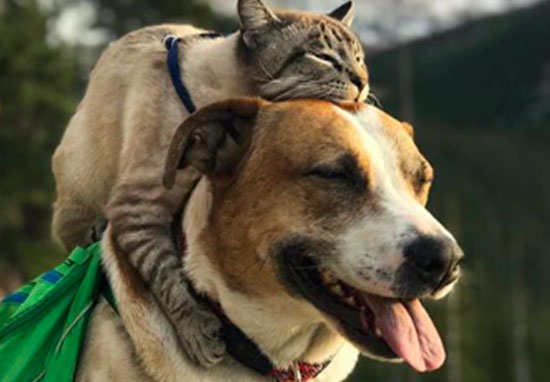 cat and dog travel