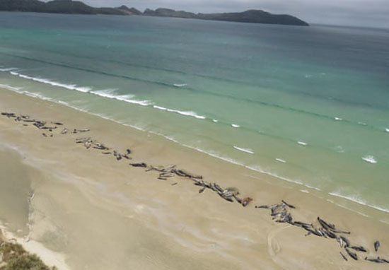 whales stranded on beach