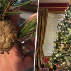 People Urged To Cut Walnut-Sized Lumps Off Christmas Tree And Leave In Garden
