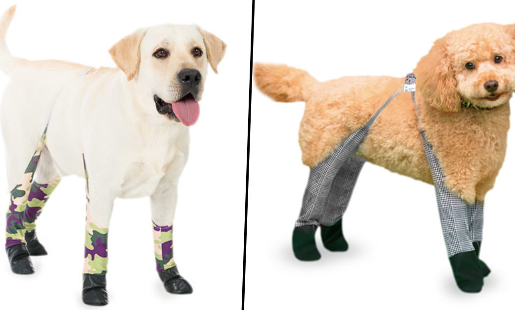 dog leggings