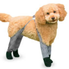 Dog Leggings Will Keep Your Dog's Legs Warm Through Winter