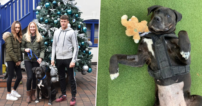 The unluckiest dog has found a home at last.