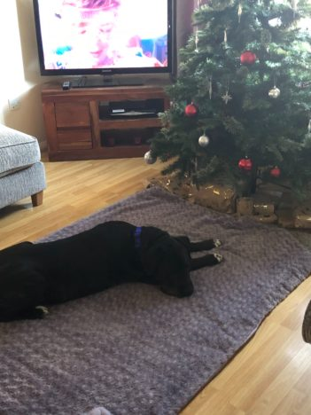Unlucky dog gets family at last.