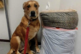Dog abandoned at shelter with toys