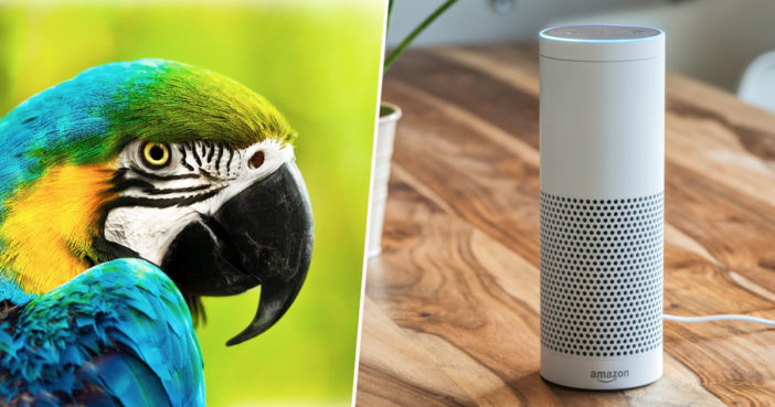 Parrot has fallen in love with an Alexa.
