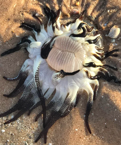 Alien like creature found in beach