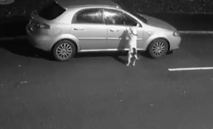 Dog jumps up at car after being abandoned